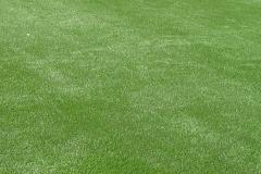 Motz Farms Synthetic Close up